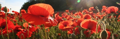 Trough Flanders fields: een teambuilding in de Westhoek